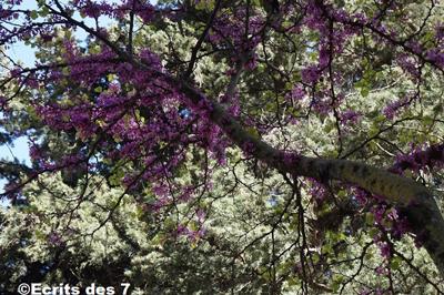 tibhirine aujourdhui fleurs